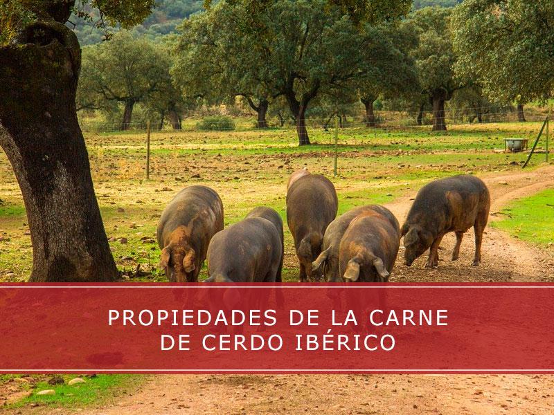 Propiedades de la carne de cerdo ibérico - Carnicerías Herrero